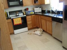 The finished floor -- clean tile and grout using hydrogen peroxide.