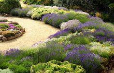 Prachtige kleuren verschillende Lavendel