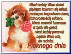 Ok Boomer, Beautiful Dogs, Emoji, Good Morning, Corgi, Album, Cute Dogs, Buen Dia, Corgis
