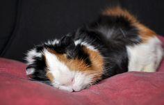 Lucky is sleeping by PiaVersense.deviantart.com on @deviantART