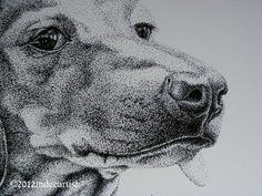 pen and ink dachshund - Google Search