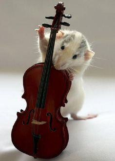 """""""Photographer Ellen van Deelen, 51, used food treats to teach Moppy and Witje to pose up with a variety of musical instruments. The """"very intelligent"""" creatures eventually learned to hold everything from panpipes to flutes, tubas, trombones, banjos and even saxophones."""""""
