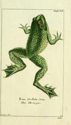 Bd 4 plates (1783) - Gemeinnüzzige Naturgeschichte des Thierreichs : - Biodiversity Heritage Library