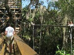 While many bikers, hikers, paddlers, and fisherman spend their days in the park, the true feature of the entire place is the Myakka Canopy Walkway. Venice Florida, Sarasota Florida, Florida Vacation, Vacation Spots, Vacation Ideas, Myakka River State Park, River Park, Outdoor Life, Outdoor Fun