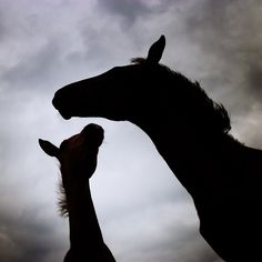 Photographer Takes Artistic Images To Capture The Beauty Of Horses