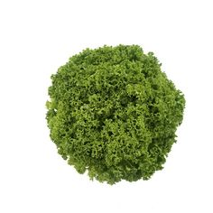 Granite is robust lollo bionda with a darker green color. Resistant to Nr 0 Hydroponic Lettuce, Hydroponic Gardening, Hydroponics, Gardening Tips, Lettuce Seeds, Fresco, Green Colors, Granite, Make It Simple