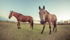 Un estudio demuestra que los caballos son más sentimentales de lo que parece....Ver más:   https://www.facebook.com/Foro-Horses-729255127151667/