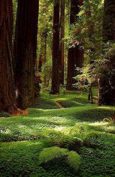 Beautiful nature!