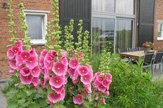 Bekijk deze fantastische advertentie op Airbnb: terras/tuin/nabij zee/rustig/D in Schoondijke