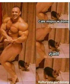 Fresh Memes, Wrestling, Humor, Sports, Lucha Libre, Hs Sports, Humour, Funny Photos, Funny Humor