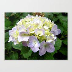 Hydrangeas - Lilac & Cream Canvas Print by Moonshine Paradise #society6 #hydrangeas #flowers #photography #canvasprint