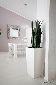 Coconut White: Uutta meidän kotona: vihreä silkkikasvi Foriamelta!