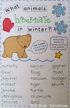 Learning about animals that hibernate in winter. anchor charts