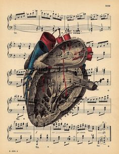 heart on music sheet // get twinkle twinkle Anatomy Images, Anatomy Art, Heart Anatomy, Heart Songs, Anatomical Heart, Human Heart, Music Tattoos, Heart Art, Illustrations And Posters