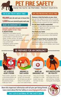 Dog Fire Safety Infographic: October is Fire Safety Month. Refresh your fire safety knowledge for pets with this educational infographic.