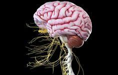Peripheral Nerve, Sciatic Nerve, Nerve Pain, Nerve Damage Symptoms, Brain Nerves, Neuropathic Pain, 8th Sign, Shocking Facts, Body Organs
