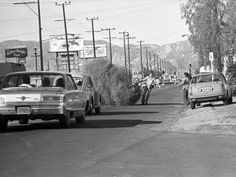 A giant tumbleweed blocks traffic on Lankershim Blvd. in North Hollywood on Jan. 23, 1974. Courtesy of the Los Angeles Times Photographic Archive, Department of Special Collections, Charles E. Young Research Library, UCLA. Used under a Creative Commons license.