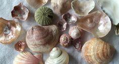 Diys, Stuffed Mushrooms, Vegetables, Babies, Food, Stuff Mushrooms, Babys, Bricolage, Essen