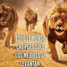 Todo el mundo cae pero solo los mejores se levantan. #Running #Motivación #Inspiración