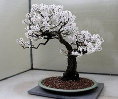 Bonsai styles are different ways of training your bonsai to grow the way you want it to. Get acquainted with these styles which are the basis of bonsai art. Flowering Bonsai Tree, Potted Trees, Bonsai Plants, Bonsai Garden, Garden Trees, Trees To Plant, Bonsai Trees, Ikebana, Plantas Bonsai