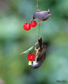 Love Birds, Beautiful Birds, Animals Beautiful, Beautiful Pictures, Tropical Birds, Exotic Birds, Colorful Birds, Gifs, African Lovebirds