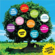 This Is What Tree Gives Us