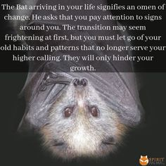 Bat As A Symbol of Rebirth & Renewal Find Your Spirit Animal, Spirit Animal Totem, Animal Spirit Guides, Animal Totems, Animal Meanings, Animal Symbolism, Witchcraft Meaning, Native American History, American Indians