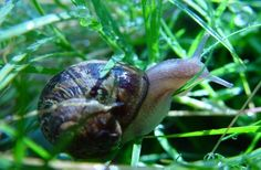 There are tens of thousands of snail species, found in a vast array of climates and habitats -- from suburban gardens to mountainous areas; from marshes to the deep ocean.