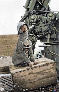 A rare light hearted view of war. A German Flak crew photo of their regimental mascot sitting by a 88mm, FlaK 36. Flugzeugabwehrkanone (aircraft-defense cannon)