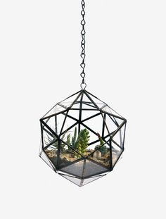 Modern Hanging Flower Planters Design as Home Accessory Ideas Hanging Terrarium, Glass Terrarium, Hanging Planters, Succulent Terrarium, Wall Planters, Terrarium Plants, Hanging Basket, Indoor Plants, Air Plants