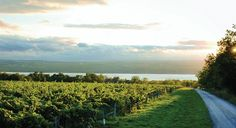 New York's Finger Lakes region produces exceptional wines, such as Riesling. (From: Six Great American Wine Regions)