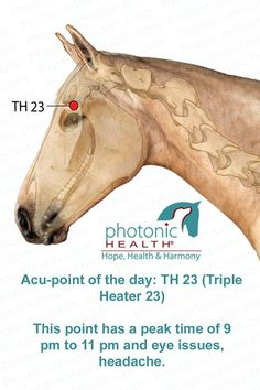 Acu-point of the day: TH 23 (Triple Heater 23) This point has a peak time of 9 pm to 11 pm and eye issues, headache. http://lechevalaunaturel.blogspot.ca/p/blog-page_14.html