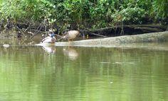 SingleMalt-CapeBreton-NorvellHimself: Life At The River - II
