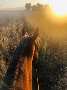 How saying goodbye to your best horse even on your own terms can break your hear… - ANIMAL PHOTOGRAPHY Cute Horses, Pretty Horses, Horse Love, Most Beautiful Horses, Animals Beautiful, Cute Animals, Wild Animals, Baby Animals, Horse Photos