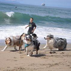 Had a great weekend  hope you all did to. Good night friends  #socalbeachdogs #beachaussies #beachday #aussiebeachday by tori_the_aussie