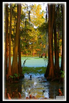 Louisiana bayou Swamp Party, Louisiana Bayou, Painting Inspiration, Serenity, Favorite Things, Scenery, Bucket, Trees, Future