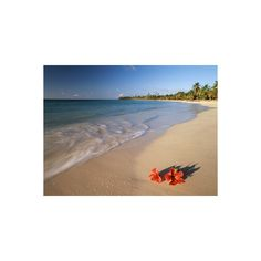 Tropical Paradise, Tabyana Beach, Roatan, Honduras Photographic Wall... (€36) ❤ liked on Polyvore featuring home, home decor, wall art, a, athletes, athletes by sport, baseball players, baseball players by name, celebrities by talent and entertainment