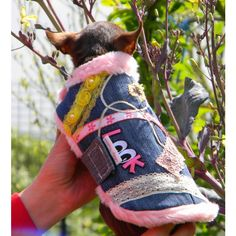Mini, Chihuahua, Hiking Boots, Smallest Dog, Doggies, Pup, Mantle, Chihuahua Dogs, Chihuahuas