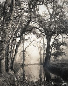 Ansel Adams - I love how Adams captured the mystic aurora in the setting. Ansel Adams Photography, Fine Art Photography, Great Photographers, American Artists, Black And White Photography, Light In The Dark, Modesto California, Northern California, Central Valley