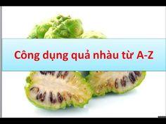 Công dụng quả nhàu từ A -Z  | TRAINHAUKHO.COM - Trái nhàu xuất khẩu