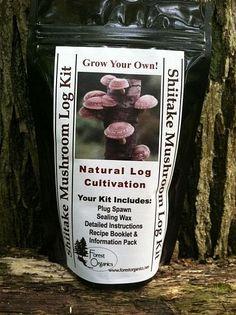 How To Grow Mushrooms | My Own Mushroom Farm