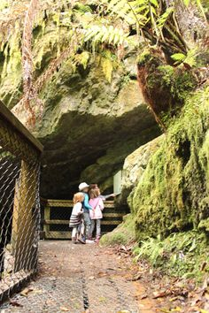 On the pathway to Junee Cave, Tasmania, January 2015 Great Places, Beautiful Places, Places To Visit, Escape Plan, Tasmania, Adventure Awaits, Australia Travel, Continents, Island