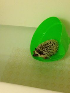 Floating around hedgehog
