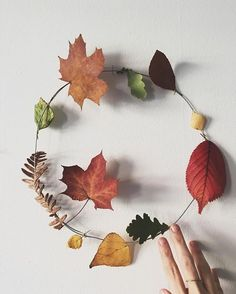 Today's harvest  Inspiration found at @tinyhouseofrym