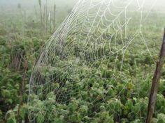 Uma telha de aranha em uma manhã de névoa na roça.