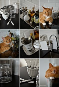 The kitchen | My Cats & Interior Ideas