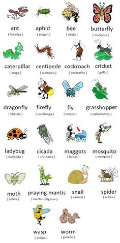 Resultado de imagen de insects vocabulary pdf
