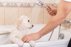 Perché i cani sono felici dopo aver fatto il bagno?