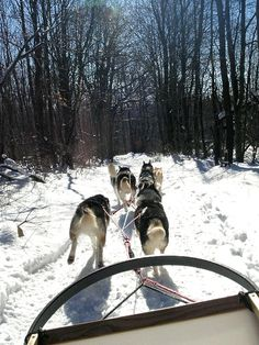 Dog Sledding at Nemacolin Woodlands Resort....need to try this when I'm home for Christmas!