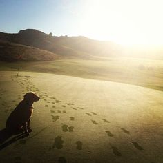 Dog on a golf course by Andrew Stoldorf. Golf course animals. Rutgers Professional Golf Turf Management School NJ,